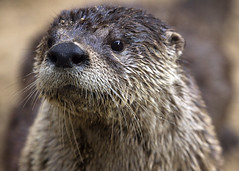 And The Otter One (Emery O) Tags: