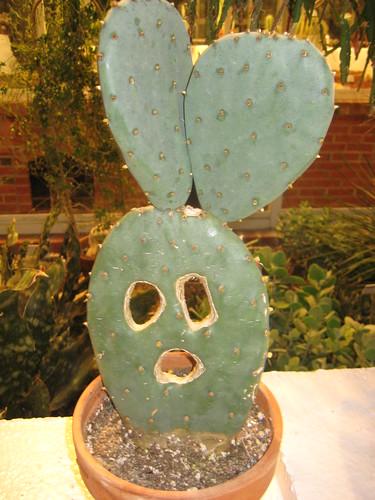 Cactus face.