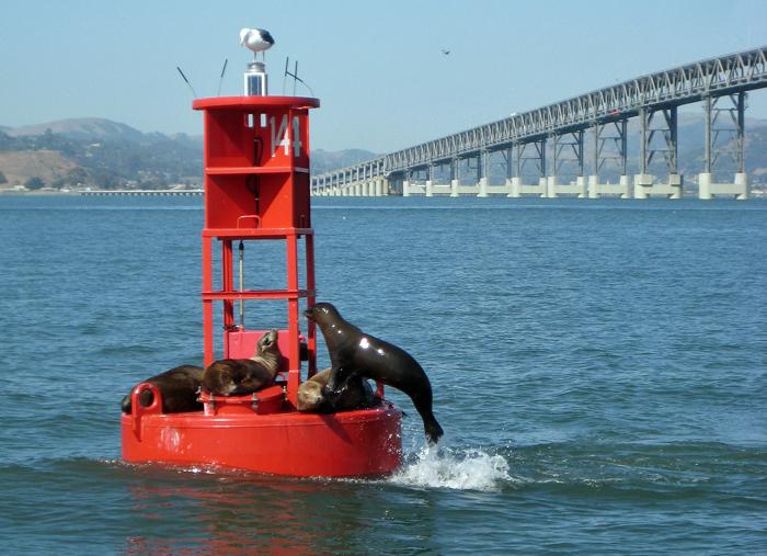 Seal Jump