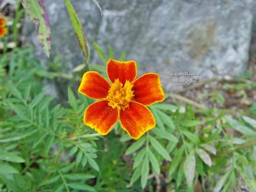 mini flower