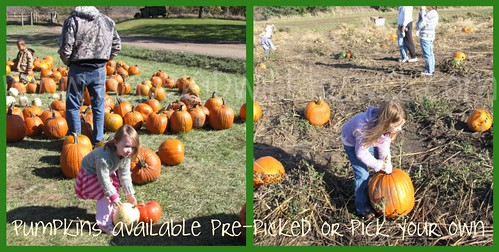 Pumpkin pickin at Center Grove Orchard, Cambridge, Iowa collage