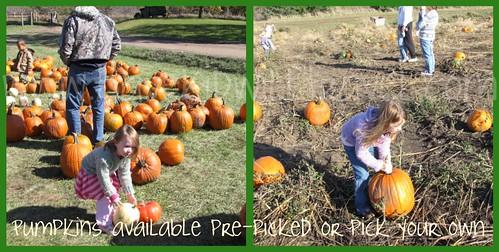 Pumpkin pickin at Center Grove Orchard, Cambridge, Iowa collage