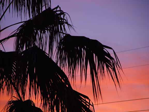 Palmtreesunset.jpg