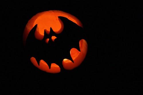 Scaredy bat