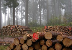 (Gerlinde Hofmann) Tags: autumn mist tree germany log woods village herbst thuringia spruce baum autumnal woodpile conifer woodstack woodlog nadelbaum herbstlich konifere lumberpile bürden