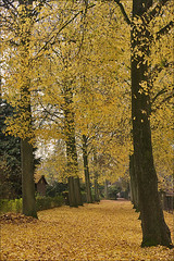 Golden Touch of Autumn (Foto Martien (thanks for over 2.000.000 views)) Tags: autumn holland color colour fall netherlands dutch automne gold colore herbst herfst nederland otoo autunno couleur veluwe niederlande goud gelderland saison arrire kleur brummen najaar herfstkleur a350 teinte abigfave theunforgettablepictures sonyalpha350 martienuiterweerd carlzeisssony1680 martienarnhem