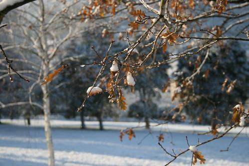 Hojas en la nieve