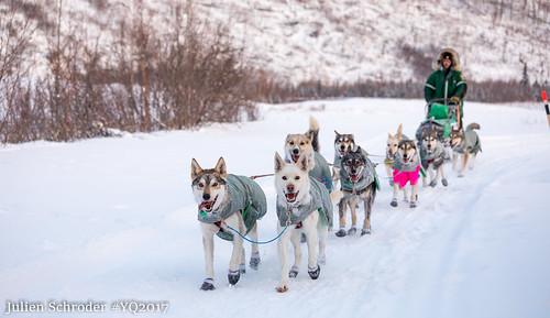 Sled Dogs Racing | www.pixshark.com - Images Galleries ...