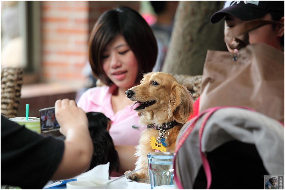 狗寶貝篇12-肚臍
