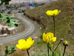 The Road (Ebrahim Baraz) Tags:   mashad  baraz flowermania