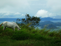 White Horse (EXPLORE # 137 MAY 21, 2009) (Gilbert Rondilla) Tags: camera horse white lake green nature grass animal point polaroid photo shoot philippines explore getty gilbert filipino digicam tagaytay taal notmycamera own pinoy stallion whitehorse gettyimages borrowedcamera pns taalvolcano tagaytaycity rondilla i733 notmyowncamera platinumheartaward polaroidi733 gilbertrondilla gilbertrondillaphotography luisianian gettyimagescollection gettyimagesphilippinesq1 sibsphoenix
