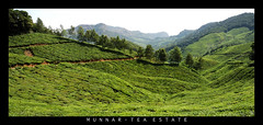 Munnar Tea Plantation (cknara) Tags: mountain nature landscape tea teaplantation kerela southindia munnar topstation