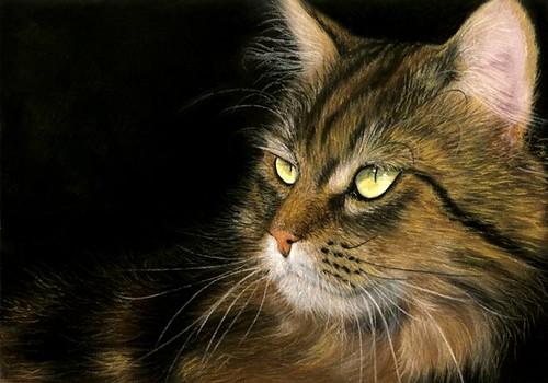 Katzenzeichnung 448 von Nordlichter4.