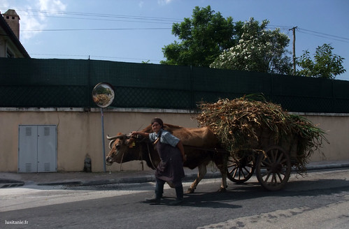 There are still old women fetching feed, with a wagon and an ox!