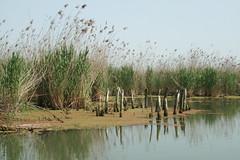 The Caspian Sea Lagoon (mola_zg) Tags: iran soe gilan caspiansea naturesfinest bandareanzali homersiliad travelsofhomerodyssey
