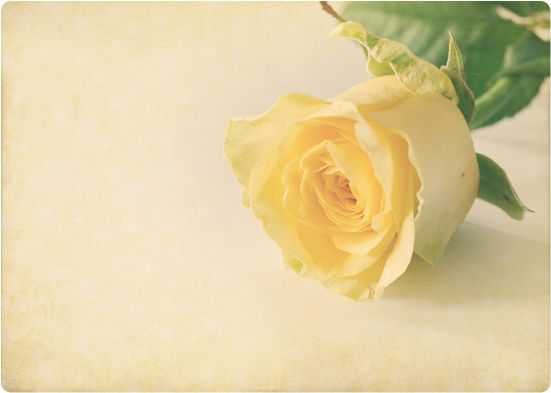Метки фото красивые цветы красивые