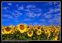 Look at the sun ( Pere Soler) Tags: flowers blue sun field yellow searchthebest explore sunflower frontpage abigfave colorphotoaward braid44 vosplusbellesphotos bestofblinkwinners