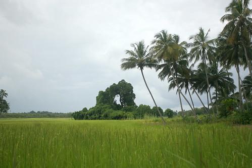 arched treeline