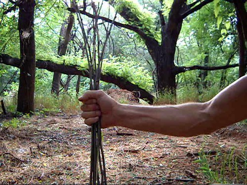 american elm tree bark. elm tree bark. out of elm tree
