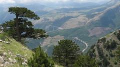 Monte Pollinello