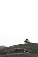 (manfrotto tripods) Tags: california blackandwhite bw tree nature tripod hill workshop tripods manfrotto dongale corradogiulietti