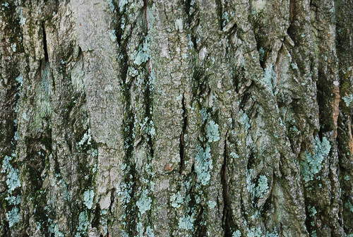 Tree Bark Textures - a set on Flickr