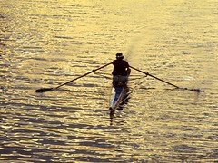 Sunset Sculling (AntyDiluvian) Tags: light sunset film water boston 35mm golden afternoon minolta massachusetts charlesriver esplanade scanned ripples 1970s seventies scull srt101 oars bostonist sculler sculling