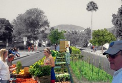 regenerative street median, imagined (by: Brian Alessi, courtesy of Reburbia)