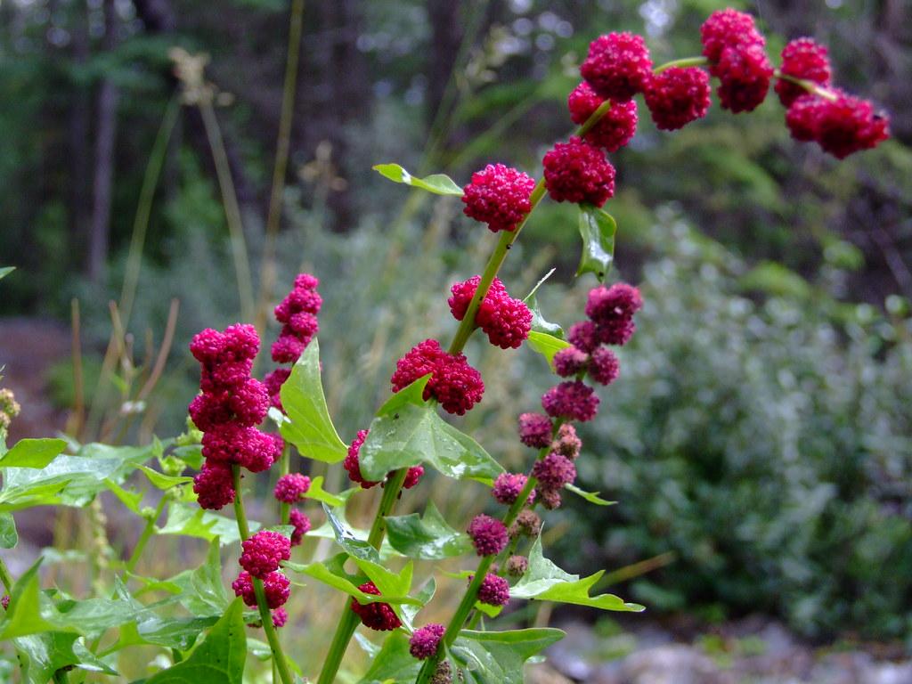 mooi bloeiend plantje