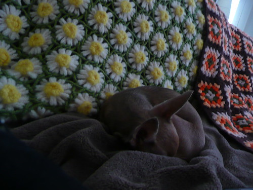 deer baby curls up on the couch.