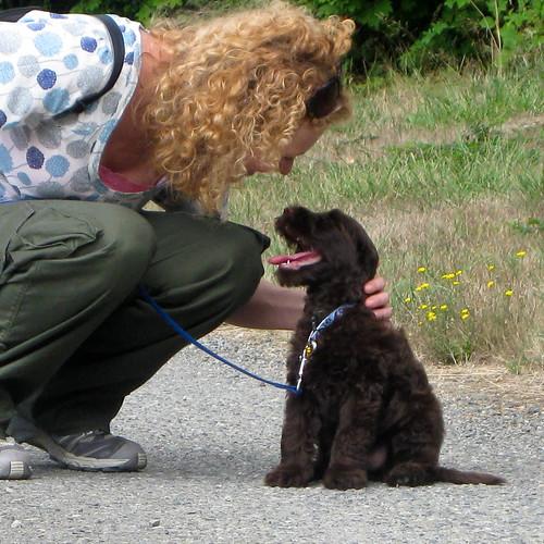 Puppy training 101