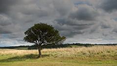 The lone tree (davidalbone) Tags: landscapes tring gbrunitedkingdom canonsx110is