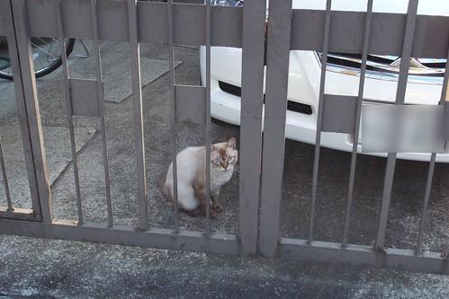 Today's Cat@20090902