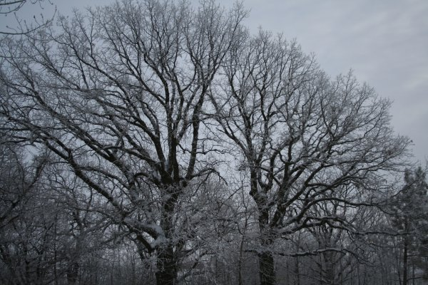 Winter Scene2