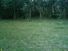 SUNP0141 (Ranger Bob) Tags: camera trail bushnell stand2