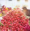 Pile of radishes (pricklypearbloom) Tags: film polaroid sx70 radishes farmersmarket instant 600film savepolaroid