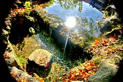 Fall pools (biosynthesis24) Tags: flowers autumn friends red panorama orange reflection green fall mill church colors beautiful leaves bells forest river germany square bayern deutschland bavaria am vines ancient stream europa europe downtown cityscape shadows seasons rooftops purple angle cathedral vibrant towers paintings wide sunny falls historic trellis fisheye clear cobblestone company waterfalls fountains turm weaving middleages hdr connection waterwheel daytrip citywall landsberg konditorei lech schwaben altenheim swabia writhing mutterturm bayernturm ameisecafe