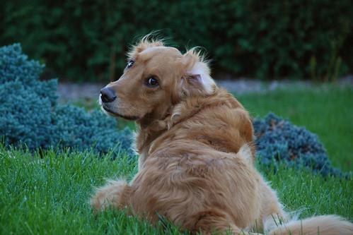 Breezy Molly