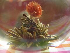 unfurled red tea blossom