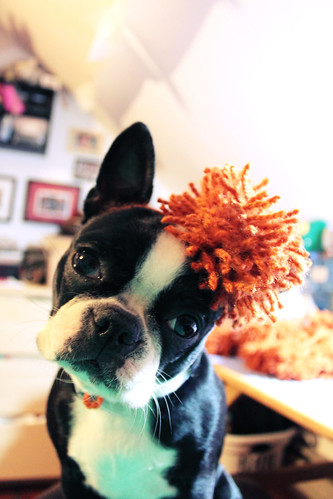remy with a pom pom on her head