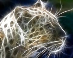 Báo hay Hổ?   4 (anhducday) Tags: hay vui báo hổ ảnhlạ