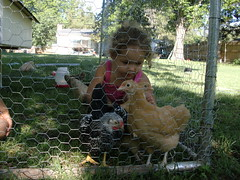 The Chicken Whisperer