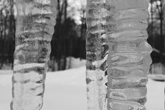 Icicles (DjD-567) Tags: nh bw cold winter icicle