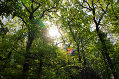 Wonderful mood in Thuringian wood (gráce) Tags: germany thuringia europe nature forest wood sun light lensflare flare canon canoneos550d trees leaves branches treebranch sunlight