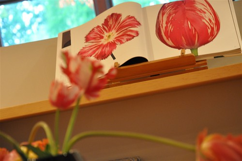 photographing tulips and drawings of tulips