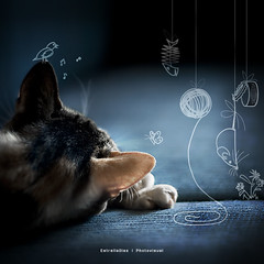 Bebas's dream (Estrella Daz Photovisual) Tags: light color luz composition cat photoshop canon sevilla retrato colorfull portait kitty gatos dreams ilustration beba vectorial ilustracin 50mm18 tacita squareframe postproduccion eos400d estrelladaz wwwestrelladiaznet estrelladiaz