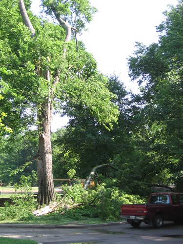 Storm Damage in Overton Park