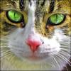 ~ Happy-Happy ~ (ViaMoi) Tags: cat eyes feline milo abigfave aplusphoto viamoi thesuperbmasterpiece 100commentgroup catnipaddicts