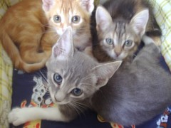 Blue (RegaloMascotas.com) Tags: gatita dosmeses