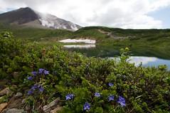 ミヤマリンドウと鏡池